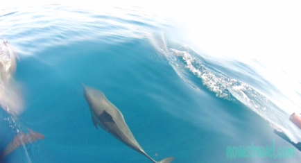 Clear blue water - image of the dolphins as they swim playfully underwater just 2 ft away from our boat